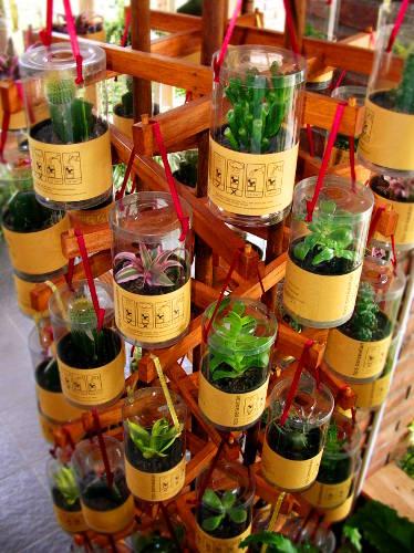 Plant souvenir